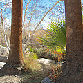 View From Creek Bed In Andreas Canyon In Indian Canyons-ca by Ruth Hager
