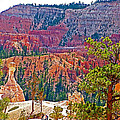 View From Queen's Garden Trail In Bryce Canyon National Park-utah by Ruth Hager