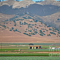 View From The Crops by Susan Wiedmann