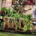 View From The Grand Canal China by Cathy Anderson