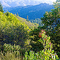 View From Trail To West Point Inn On Mount Tamalpais-california  by Ruth Hager