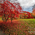 View Of Autumn by Adrian Evans