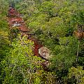 View Of Cano Cristales In Colombia by Jess Kraft