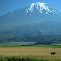 View Of Mount Ararat In Turkey by Cagan H. Sekercioglu