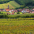 View Of Rodern From The Vineyards Of Alsace by Greg Matchick