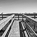 View Of The Elkhorn Slough From A Platform.  by Jamie Pham
