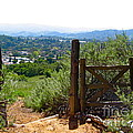 View Of The Ojai Valley by Denise Mazzocco