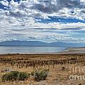 View Of Wasatch Range From Antelope Island by Donna Greene