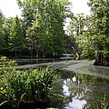 View Over Magnolia Plantation Lake by Christiane Schulze Art And Photography