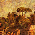 View Over The Forum In Rome by Greg Matchick