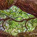 View Through Angel Oak Tree by Dale Powell