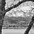 View Through The Trees To Longs Peak Bw by James BO  Insogna