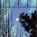 View Thru Frost by Kelley Freel-Ebner