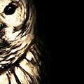 Vigilant In Darkness by Lourry Legarde