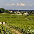 Village Of Aloxe Corton. Cote D'or. Burgundy. France by Bernard Jaubert