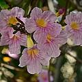 Villalba Flowers by Ricardo J Ruiz de Porras