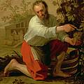 Vine Grower, 1628 Oil On Canvas by Jacob Gerritsz Cuyp
