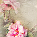 Vine Of Pink Roses by Jeeby Designs