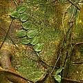 Vine On Tree Bark by Stuart Litoff