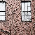 Vines And Brick by Natalie Rotman Cote