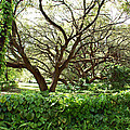 Vines And Oaks by Aimee L Maher ALM GALLERY
