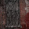 Vines Of Decay by Amy Cicconi