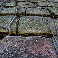 Vines On Stonework by David Dufresne