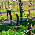 Vines On Wire 22637 by Jerry Sodorff