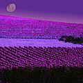 Vineyard 40 by Xueling Zou
