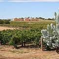 Vineyard And Winery by Carl Koenig