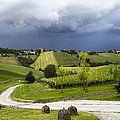 Vineyard by Cristian Mihaila