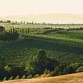 Vineyard From Above by Clint Brewer