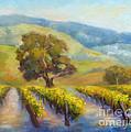 Vineyard Gold by Carolyn Jarvis