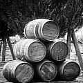 Vineyard by Image Takers Photography LLC - Laura Morgan