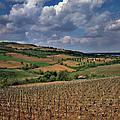 Vineyard In Frushka Gora. Serbia by Juan Carlos Ferro Duque