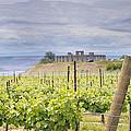 Vineyard In Maryhill Washington State by Jit Lim