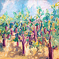 Vineyard In The Afternoon Sun by Todd Bandy