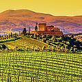 Vineyard In Tuscany by Deimagine