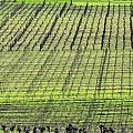 Vineyard Lines 23048 by Jerry Sodorff