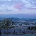 Vineyard Morning Light by Jean Noren