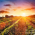 Vineyard by Mythja  Photography