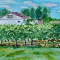 Vineyard Of Ontario 2 by Jeannie Allerton