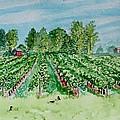 Vineyard Of Ontario Canada 1 by Jeannie Allerton