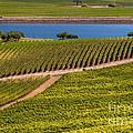 Vineyard On A Lake by Bob Phillips