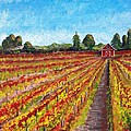 Vineyard On Dry Creek Road by Harlan Gilbert