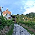 Vineyard Path by Sarah Christian
