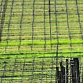Vineyard Poles 23051 2 by Jerry Sodorff