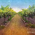 Vineyard Road by Shari Warren