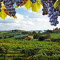Vineyards In San Gimignano Italy by Susan Schmitz