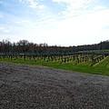 Vineyards In Va - 121267 by DC Photographer